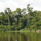 Forest on the banks of the Congo river system, DR Congo. PHOTO: Greenpeace