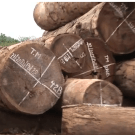 Global Witness film about industrial logging in DR Congo