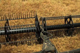 Wheat Harvest 2012