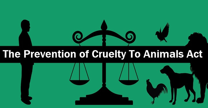 """""""Manipur High Court directs State Government to Implement The Prevention of Cruelty to Animal Act, 1960 in letter and spirit."""""""