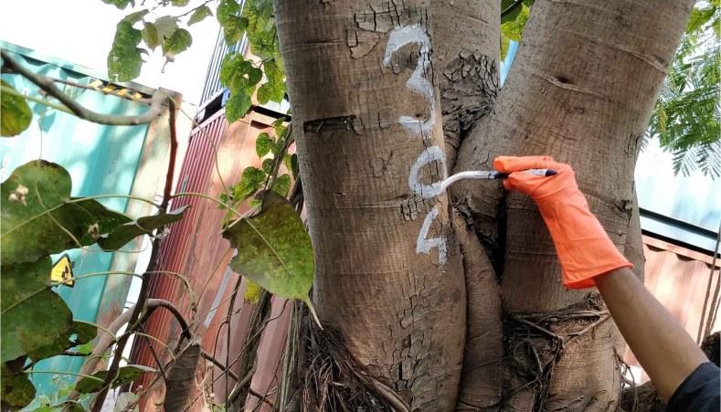 Tree Census to be conducted in Bengaluru: Karnataka High Court
