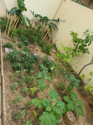 organise garden landscaping