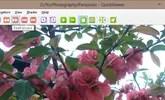 QuickViewer, un visor de imagenes optimado para Windows