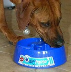 dogpause2 small DogPause   the healthy dog bowl