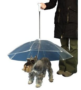 Dry Bones – dog umbrella