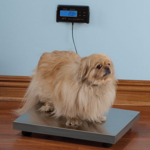 The Pet Scale is the expensive way to weigh your furry friend