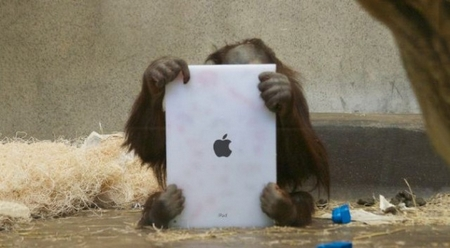 Orangutans use iPads at zoos