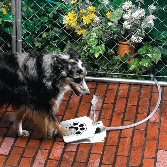 Doggie Fountain keeps Fido hydrated in the summer