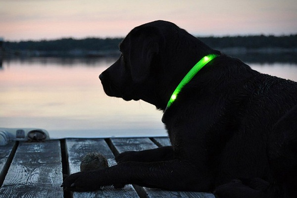 Glowdoggie will keep you from panicking about your pooch