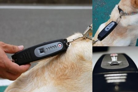 PatentoPet DOG-e-Walk teaches your pup not to get ahead of themselves