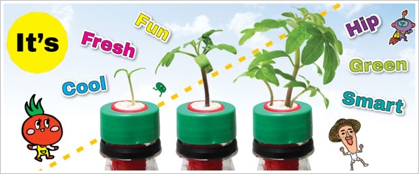 Petomato – cool way to grow delicious stuff and recycle at the same time