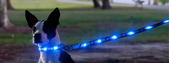 Dog-E-Glow LED Light Up Dog Leash – the leash that safely lights your way