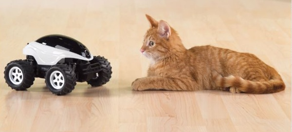 Live Video Feed RC Buggy – spy on your pets from the other room