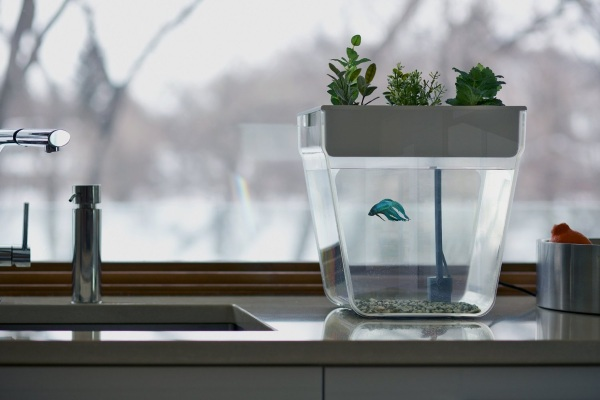 Back to Roots AquaFarm – the desktop aquaponic farm for your office
