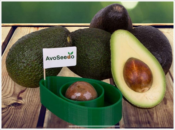 AvoSeedo – grow yourself an endless supply of free avocados