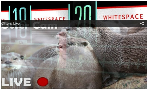 TV White Spaces – otters, meerkats and the future technology behind a real internet of things