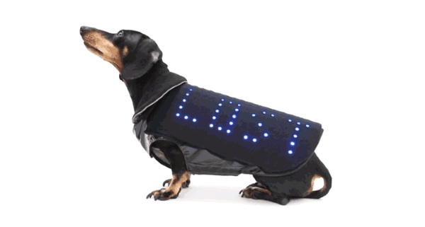 Disco Dog – turn your dog into a party with every walk you take