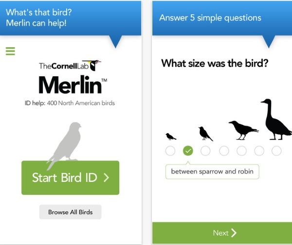 Merlin Bird ID App – was that a crow or a blackbird? There's an app for that [FREEWARE]