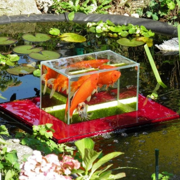 Fish Observatory – show your fish a whole new world