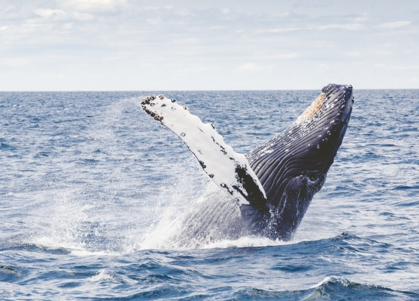 Blue Whale – this app is fake but the danger is real