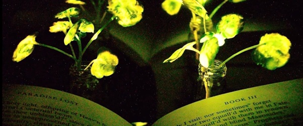 Glowing Plants – MIT is working on making nature really light up