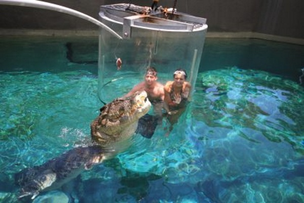 Cage of Death – see crocodiles up close at this cool exhibit