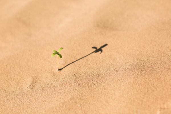 Liquid Nanoclay – turn the desert green