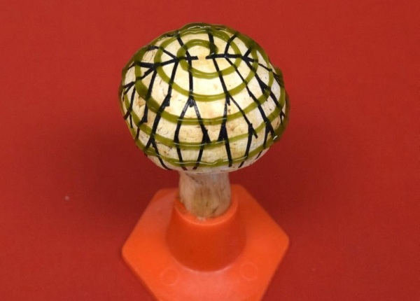 Power Mushrooms – the future of electricity may be in fungi