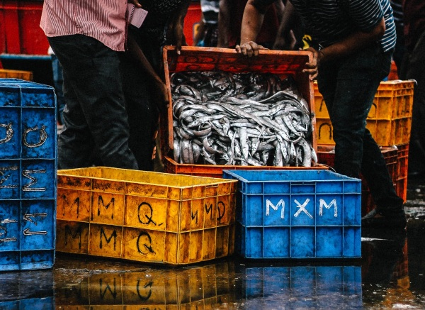 Fish Waste To Fuel – cruise ship company moving towards renewable fuel from waste