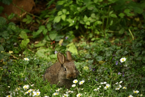 Plants with Rabbit DNA Clean Air Better – new study reveals that unlikely pairing make better air purifiers