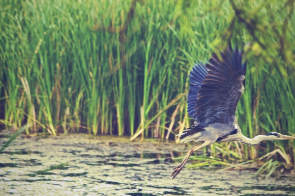 Saving Wetlands – marsh mud can help fight climate change