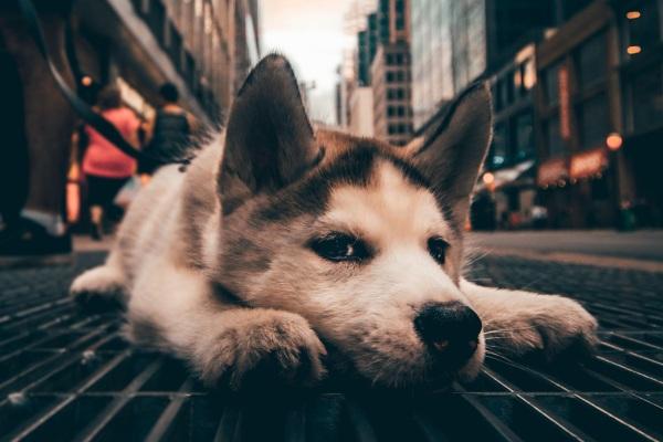 BringFido – find pet friendly vacation information