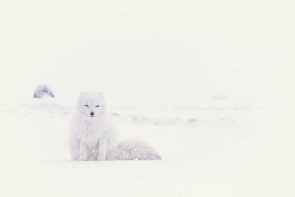 Microplastics Found in the Arctic – plastic found in the snow