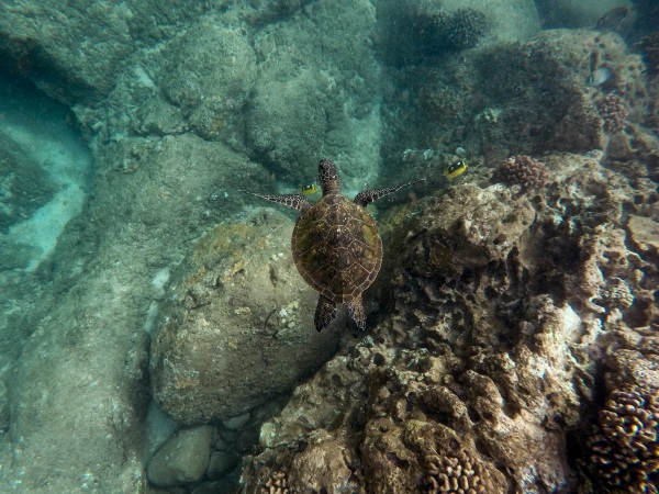 Coral Reefs Bounce Back – given some time to heal, some reefs are showing new signs of life