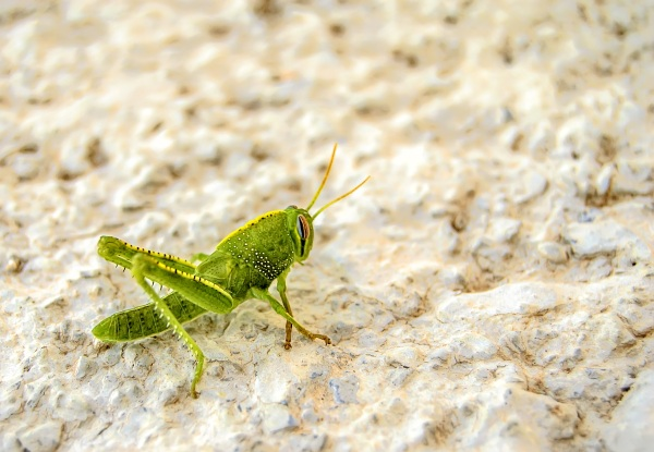 Insect Pet Food – a sustainable pet food option?