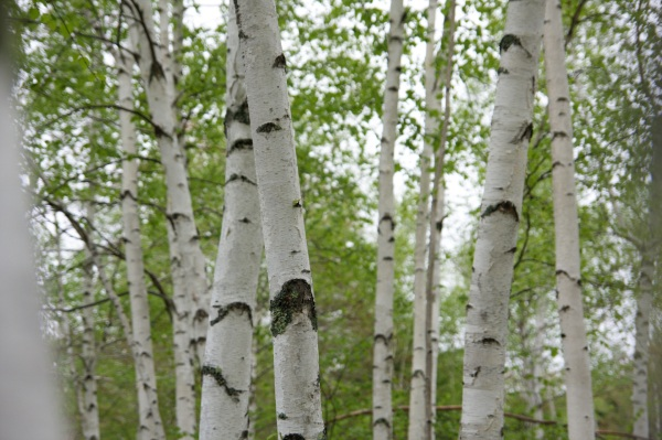 Planting Trees Worth It? – even with the unknown, it can't hurt