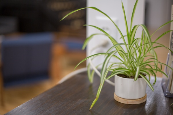 Are Houseplants Bad – is your fern more trouble than it's worth?