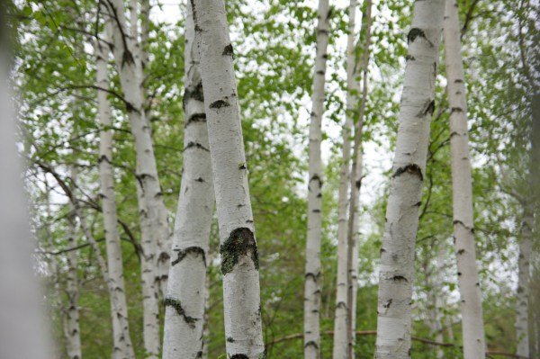 Trees Are Changing With The Climate – but will it be enough?
