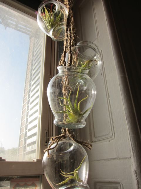 Air Plant Chandelier Giveaway! | Red-Handled Scissors
