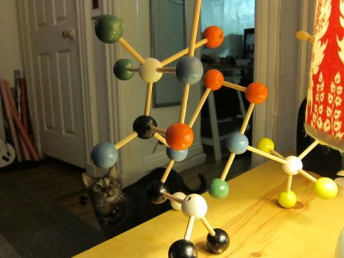 Sunday Snapshot: Two Cats and a Molecule Set | Red-Handled Scissors
