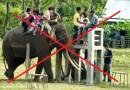 bahaya naik gajah