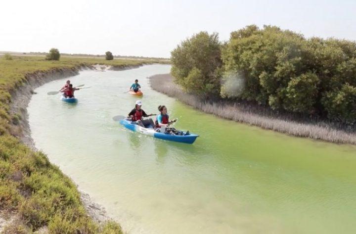 al-thakira-mangrove-in-qatar