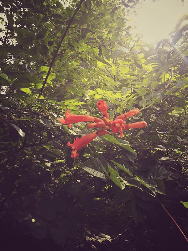Hiking through nature