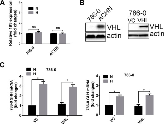 Reciprocal Regulation of Hypoxia-Inducible Factor 2α and