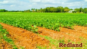 South Florida's rich red soil gives the farming region it name.