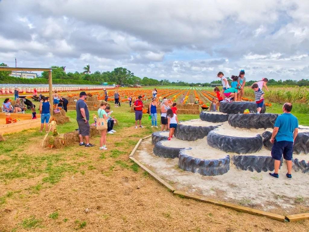 Burrs Berry Farm - Harvest Festival