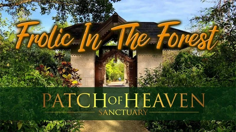 Patch of Heaven Sanctuary - Frolic In The Forest