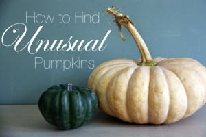 How to Find Unusual Pumpkins   redleafstyle.com