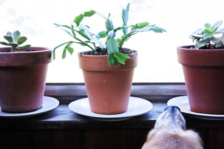 Thrift Store Plant Saucers   redleafstyle.com