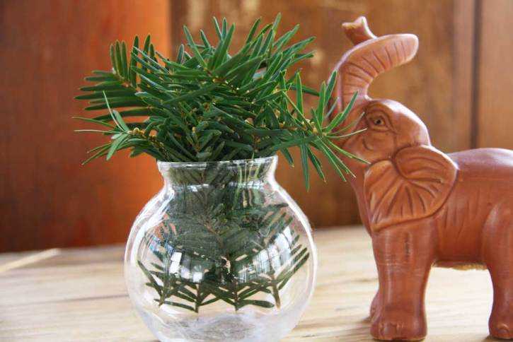 Green plant in round vase | redleafstyle.com